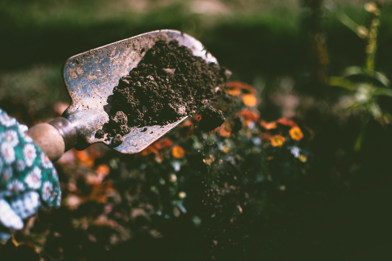 What is the best soil for planting cannabis seedlings?