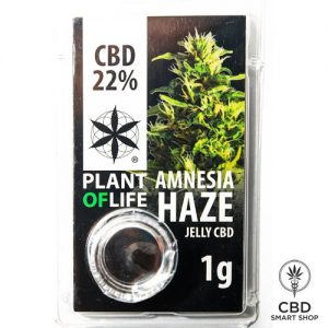 Amnesia Haze CBD hashish 22%